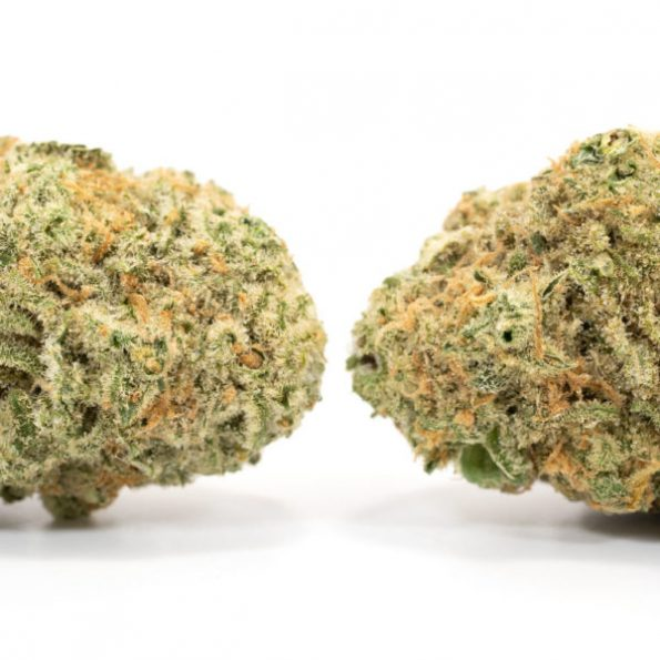 Girl-Scout-Cookies-2-600×600