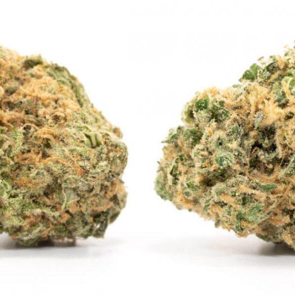 Hashplant-2-600×600