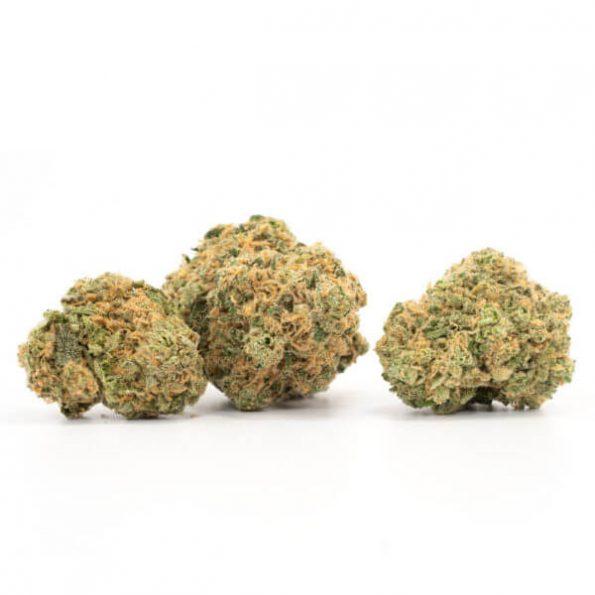 Hashplant-3-600×600