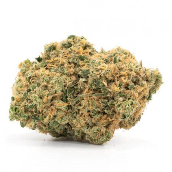 Hashplant-600×600